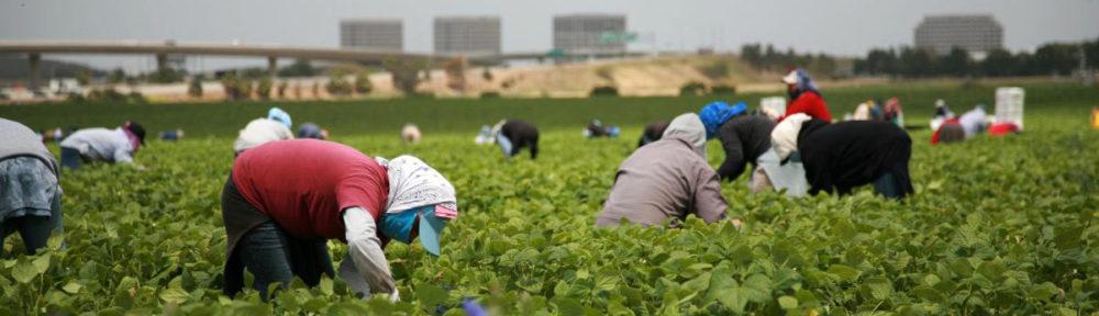 Migrations et agriculture en Méditerranée (et au-delà)